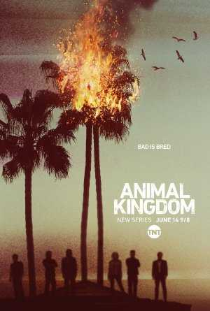 Animal Kingdom - amazon prime